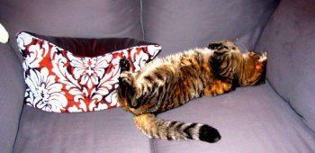 decoratingwithcats