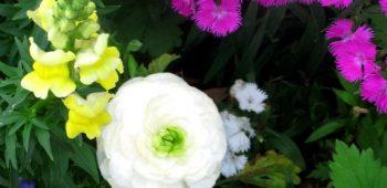 mysteryflower