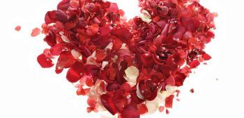 heartflowerpetals