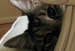 spycatsmall