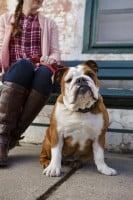 English Bulldog Hazel-0040 (1)